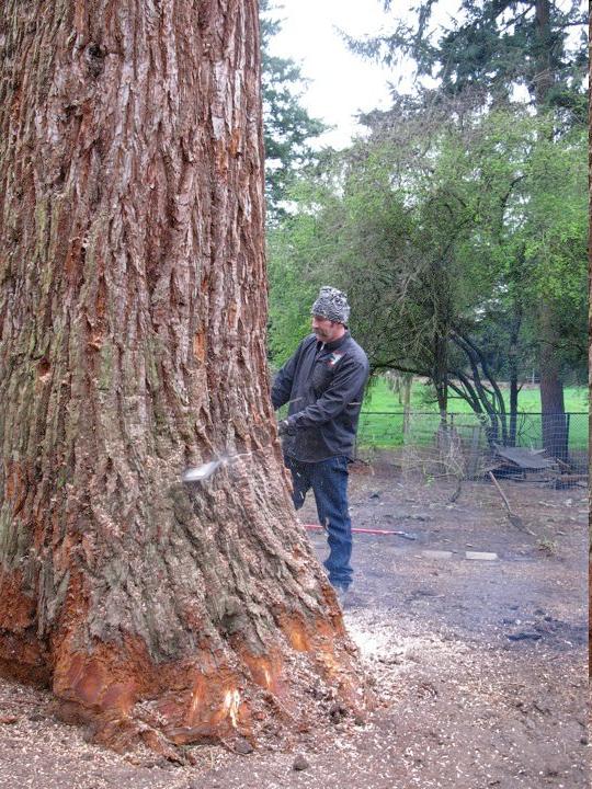 Tree Removal By Tree Masters Tree Service Portland Oregon